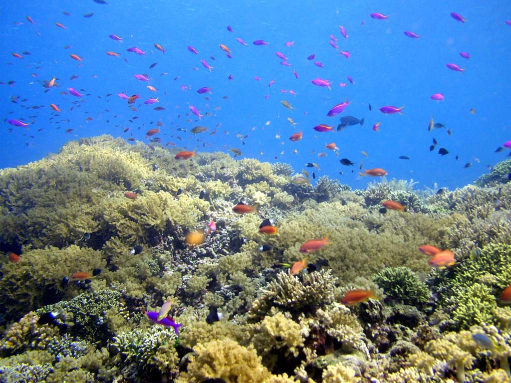 Bunaken meet with thousands of colorful fish bli wahyu for Fish under the sea