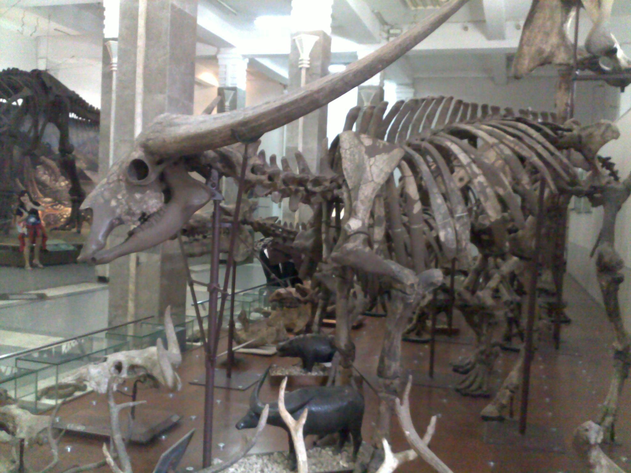 450 Koleksi Gambar Fosil Hewan Purba Terbaik