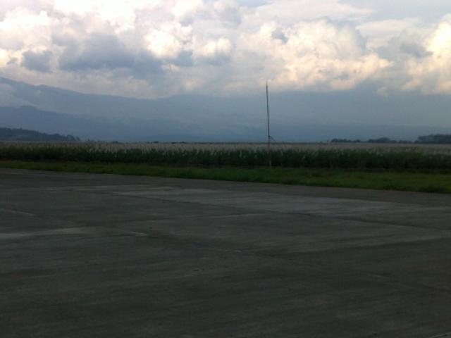 lahan di sekitar landasan pacu ditanami tebu.