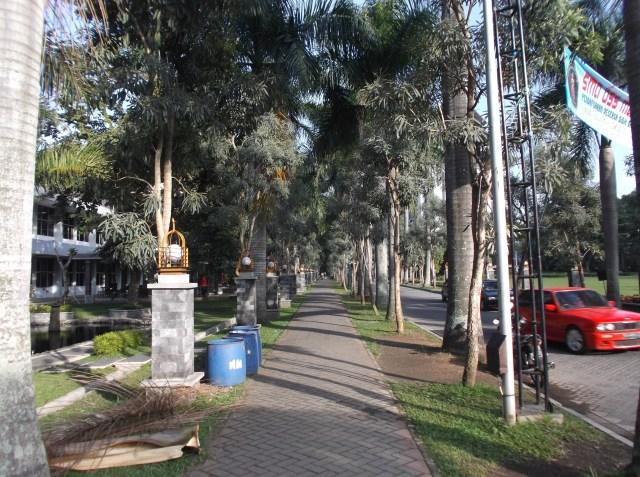 Deretan pohon palem dan jalan pedestarian yang lebar.