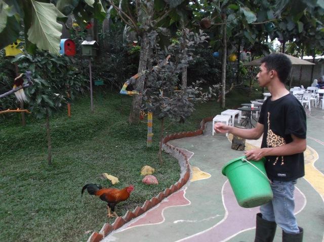 Petugas sedang memberi makan berbagai burung. Makanannya adalah serangga jangkrik.