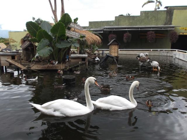 Kerajaan bebek (duck).