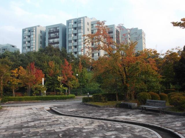Awal musim gugur (autumn) di Jepang. Daun-daun pohon maple dan  sakura sudah mulai memerah di kampus JAIST
