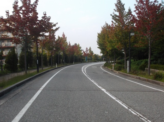 Pohon-pohon maple dan sakura sepanjang jalan kampus yang sedang memerah daunnya di awal musim gugur.