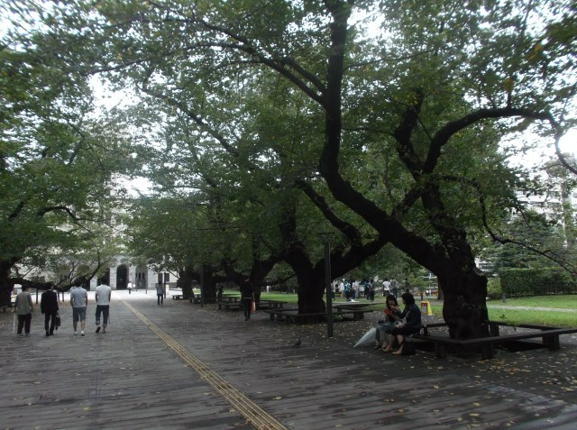 Deretan pohon sakura yang rindang.