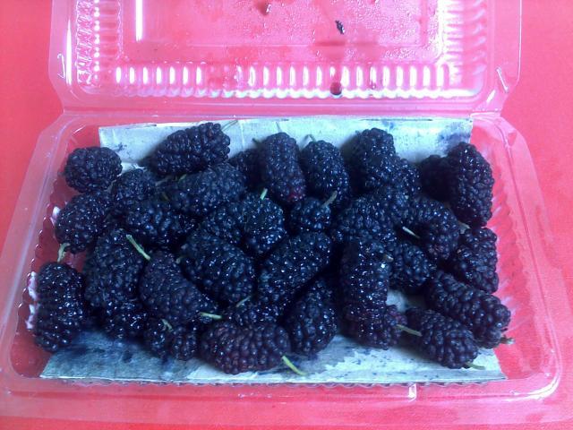 Foto blackberry lainnya dengan latar belakang alas berwarna merah.