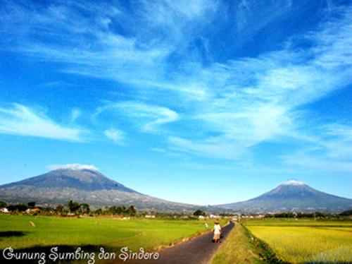 Pemandangan Gunung Sindoro dan Gunung Sumbing (Sumber: http://www.temanggungkab.go.id/potensi.php?mnid=100)