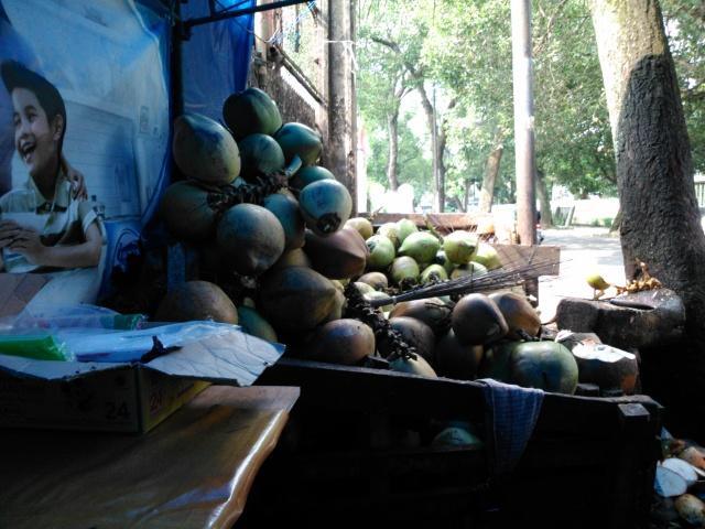 Kelapa-kelapa muda yang siap untuk diambil air dan dagingnya.