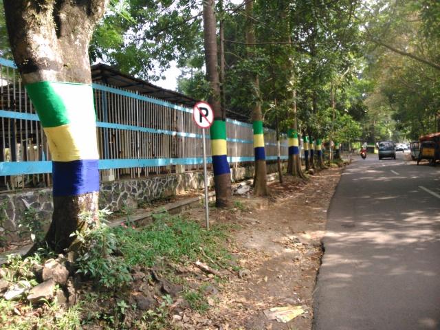 Deretan pohon bersarung di sepanjang jalan Ciung Wanara.