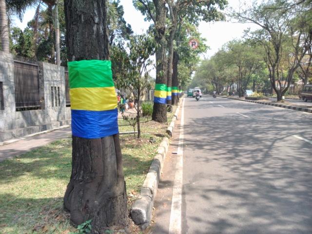 Deretan pohon bersarung di sepanjang Jalan Supratman