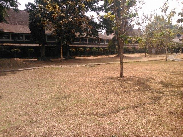 Rumput yang telah menguning di samping Aula Barat ITB