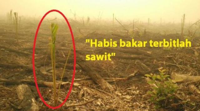 Habis bakar, terbitlah sawit. (Sumber; @Sutopp_BNPB)