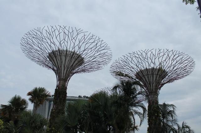 Pohon-pohon raksasa